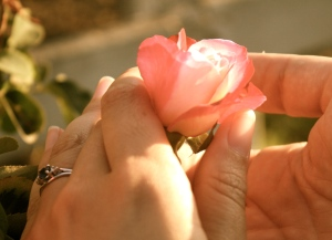 Hands and Flower3